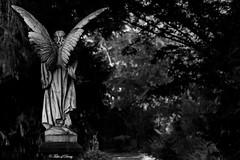 Köln, Melaten Friedhof (Sven Kapunkt) Tags: köln melatenfriedhof melaten friedhof friedhöfe cemetery cemeteries cimetière nordrheinwestfalen nrw gräber grab graveyard grabmal statue engel angel