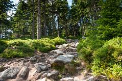 Czarna Góra (MichalKondrat) Tags: natura masywśnieżnika kotlinakłodzka pejzaż krzewy krajobraz ścieżka drzewa czarnagóra 2017 las sierpień sudety przyroda dolnośląskie zieleń polska góry