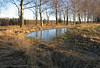 20050108.10.Is.ved.kanten.av.åker.speiler.trærne.jpg (Erlender) Tags: landskap type trær is åker andretags natur speiling