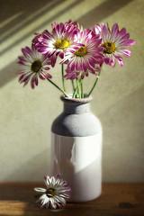 Chrysanthemum Daisies Still Life (Through Serena's Lens) Tags: stilllife eos6dmarkii canon sunlight shadow texture daisies chrysanthemums flower tabletop indoor