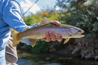 Montana Bighorn River Fishing Lodge 31