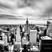 NYC+zoomburst