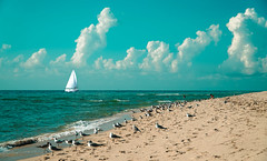 The sailboat. (Aglez the city guy ☺) Tags: sailboat walking waterways walkingaround exploration earlyinthemorning beach beachscape colors clouds miamibeach seashore seascape seagull