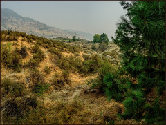 Smokey Desert (Martin Smith - Having the Time of my Life) Tags: smokey desert forestfiresmoke sage martinsmith ©martinsmith nikond750 osoyoos okanagan nk'mipdesertculturalcentre osoyoosdesertcentre nikkor2485mmf3545gedvr ponderosapine antelopebush britishcolumbia canada ca pano panorama grass smoke