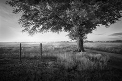 Two Fence Posts (shutterclick3x) Tags: landscape countryside tree fence blackandwhite bw frankloose