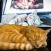 Three+sleeping+kitties%2C+one+cat%21+%F0%9F%90%88%F0%9F%90%88%F0%9F%90%88