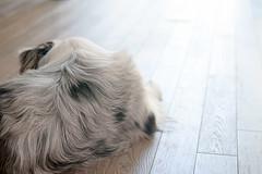 lazy, hazy days of summer (observed.by.diane) Tags: negativespace highkey light dog minimalism simplicity