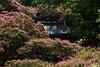 _DSC8212 (vhbin) Tags: 담양군 전라남도 대한민국 a99ii a99m2 명옥헌 담양출사지 담양 배롱나무 백일홍 꽃사진 연꽃 해바라기