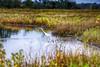 (Kansas Poetry (Patrick)) Tags: bakerwetlands birds egrets wetlands kansas onlyinkansas lawrencekansas