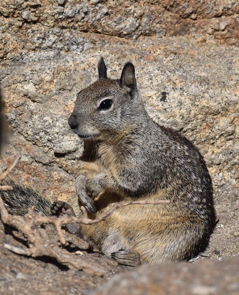 """squirrel research paper Problem-solving powers may help to explain why grey squirrels have taken over from native red squirrels in the uk, new research says the study tested wild squirrels with an """"easy"""" the paper, published in the journal animal behaviour, is entitled: """"a battle of wits problem-solving abilities in invasive."""