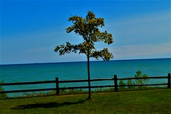 HFF-with lone tree and lake huron (SCOTTS WORLD) Tags: adventure america angle sky shadow sunlight summer sooc clouds country green grass tree lonetree light leaves lake landscape lakehuron greatlakesstate greatlake thumb porthope view vista fun fence hff michigan midwest rural ship freighter horizon cliff panasonic pov perspective park september 2017 nature water peaceful open minimalism