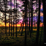 Digital Pastel Drawing of Sunset in a Forest in Sweden by Charles W. Bailey, Jr. thumbnail