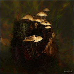 Mushroom - Spot (Pana53) Tags: photographedbypana53 pana53 texturedbypana53 textured pilze mushrooms naturfoto naturfotografie makro lichtschatten lichteinfall nikon nikond500