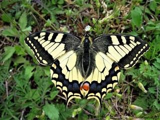 Butterfly 1431