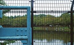Fence (odeleapple) Tags: leica llla elmar 5cm kodakultramax400 film fence pond