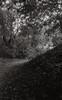 Film # 324 - 3 (Sven Kaschmir) Tags: nikon f55 foma retropan soft retro special entwickler 5 min 20 grad analog