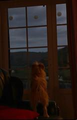 Par le Chateau Latsaga (30) (Sebmanstar) Tags: pyrénées europe europa explore eos research region travel tourisme tourism traveler origine photography paysage basque france french hauteur landscape light campagne campaign visite balade nature natural histoire historique 7d height