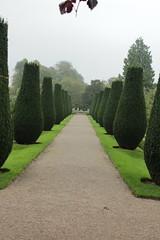Trees (daveandlyn1) Tags: yewtrees erddig nationaltrust nrwrexham northwales iii f3556 efs1855mm 1200d eos canon