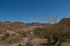 Mule Ears Trail