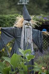 Scarecrow (billcoo) Tags: fujifilm f28 fujinon 50140mm fuji