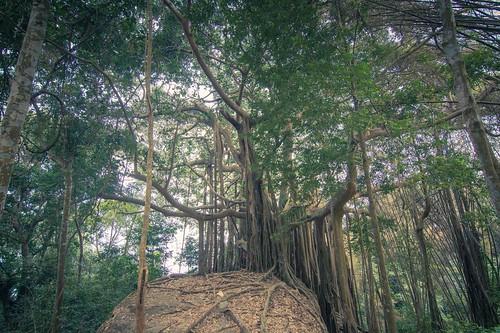 ramkhamhaeng national park - thailande 30