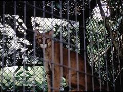 1994_Singapore_2016-07-18_Photo_276 (Matthias & Paula) Tags: singapore sentosa kuala lumpur malaysia cameron highlands zoo japanese gardens