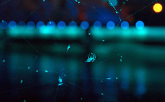 SPIDERBLUE & THE ORANGE MOON (BLEUnord) Tags: araignée spider bleu blue lune moon orange spectacle show avudo stlarent stlawrence soir evening montréal 375