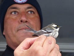 Alvaro with a Black-throated Gray Warbler (Oscar Moss) Tags: