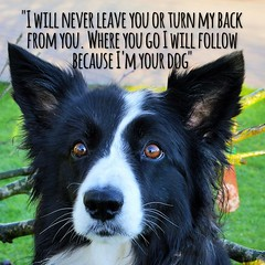 PAubJB_a68f027c356751f626559f3695b86a06c6252587 (ASHA THE BORDER COLLiE) Tags: ashathstarofcountydown inspirational quote soulful border colliebeautiful