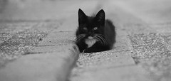 ...Katzenbaby (jueheu) Tags: augen katze kätzchen jungekatze cat cats youngcat young schwarz black weis white grau grey sw bw schwarzweis blandandwhite fokus eye eyes animal tier tiere niedlich nice