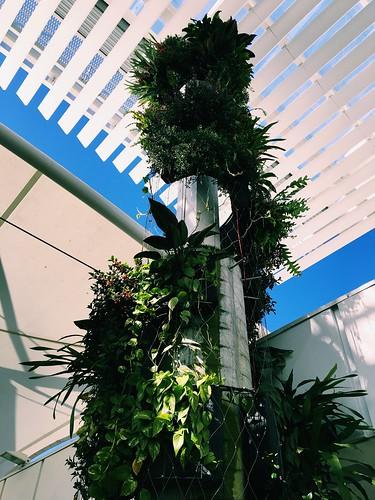 Epiphyte columns @warringahmall