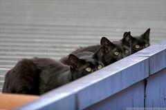 Cats in Paris (lystseva) Tags: paris gare du est cat cats кот кошка бандит черный смешные коты fanny fannycat
