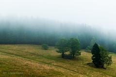 pod pierzyną (MichalKondrat) Tags: natura masywśnieżnika niebo pejzaż krajobraz drzewa polska 2017 35mm sierpień kotlinakłodzka sudety przyroda dolnośląskie zieleń góry chmury gminabystrzycakłodzka województwodolnośląskie poland pl