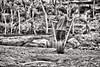 Boy with a tire toy in Honduras (Pejasar) Tags: honduras rural back cow sticks toy tire boy blackandwhite bw