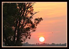 Huge Sun Setting (bigbrowneyez) Tags: silhouette clouds cielo alberi sole huge big grande nature natura amazing fabulous striking stunning magical delightful hugesunsetting branches remicrapids ottawacanada ottawa ru ottawariver flickrmagic tall epic hazy
