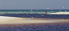 Dune Lake entering the Gulf Of Mexico (showmesavings) Tags: dunelake lake seagulls florida