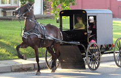 Trotting horse (thomasgorman1) Tags: horse equestrian buggy people road street streetphotos town strasburg pennsylvania canon trot trotting travel traditional rural amish