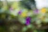 The Autumn Garden 3 (jfl1066) Tags: autumn autumn2017 rutgersgardens newjersey middlesexcounty nj