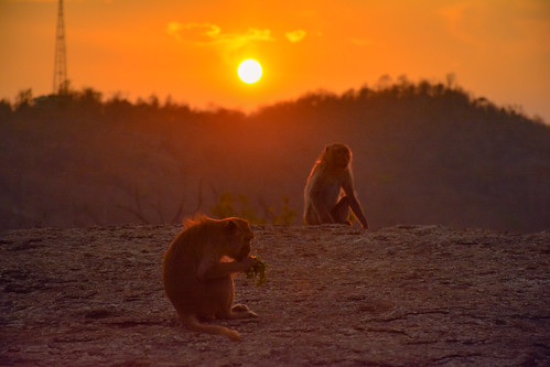 Monkeys Sunset