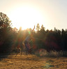 jumping (CI !) Tags: ballet balletdancer guy boy jump maledancer saltar light sunset field campo