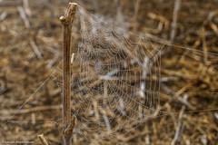 Noch ein Spinnennetz (J.Weyerhäuser) Tags: mainz laubenheimerhöhe spinnennetz nebel felder