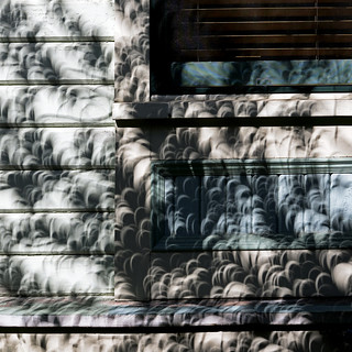 grasping at the shadow