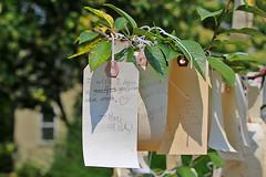Wishing tree (cheryl.rose83) Tags: berkshiresbotanicalgarden berkshires stockbridge wishes tree