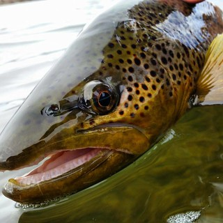 Montana Bighorn River Fishing Lodge 16
