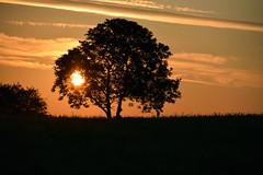 A l'aube d'un nouveau jour (Croc'odile67) Tags: nikon d3300 sigma contemporary 18200dcoshsmc paysage landscape levéedesoleil arbre tree ciel sky