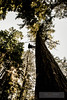 EOG-55.jpg (Joel Spooner Photography) Tags: arblife arborist bc expeditionoldgrowth joelspooner joeliphoto climbtrees exploretrees explorebc inspire learntoclimb oldgrowth treeclimbing