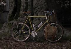 Durfee Conservatory, U-Mass (koperajoe) Tags: cyclotourisme autumn bicycle westernmass beech cycling 650b