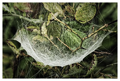 Cobweb (Myrialejean) Tags: cobweb spider dew wet damp water spiderweb threads droplet droplets weave string autumn fall weather morning nature d7200 macro outdoor trap arachnid pattern beauty network net hammock