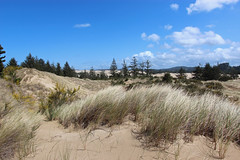 Oregon Dunes National Recreation Area (russ david) Tags: oregon dunes national recreation area coast pacific april 2017 or landscape grass