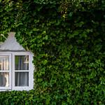 Fenêtre secret - Secret Window thumbnail